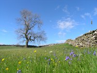 bluebells and buttercups Higher Stackbottom