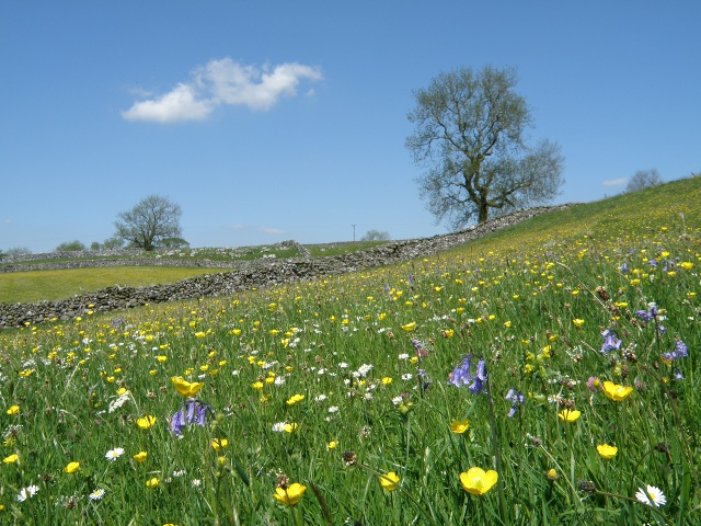 Hay Meadows at Lower Winskill